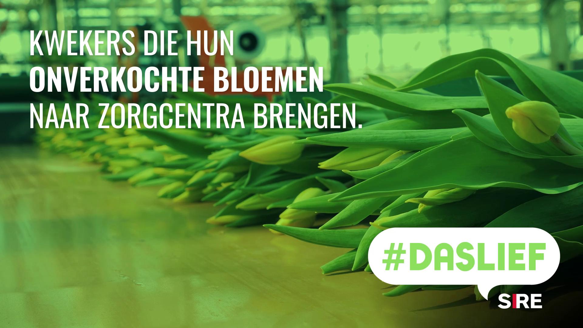 SIRE #DASLIEF